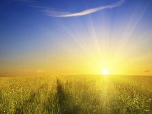 Sunshine-Landscape-48